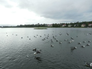 Pond 4