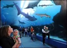 Photo credit: Georgia Aquarium